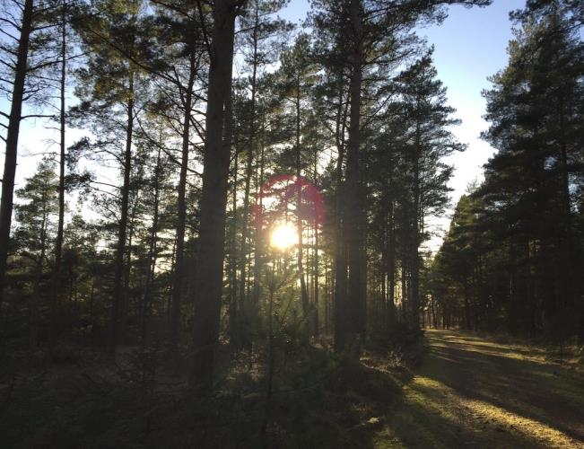 80069, Napstjært, Ålbæk